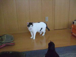 2007年12月7日。初めての猫部屋にびっくりするサラ。