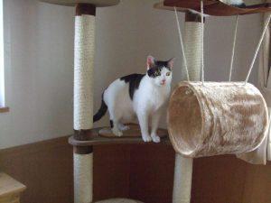 2007年12月7日。キャットタワーで目を見開くサラ。